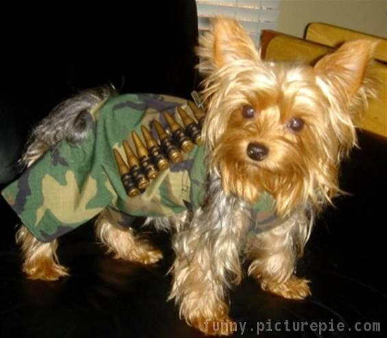 Military-Doggy-Costume