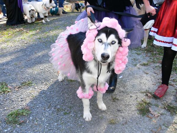Pink-Poodle-Dog-Costume