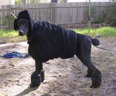 Poodle-Dog-Costume