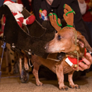 Reindeer with Sleigh Dog Costume