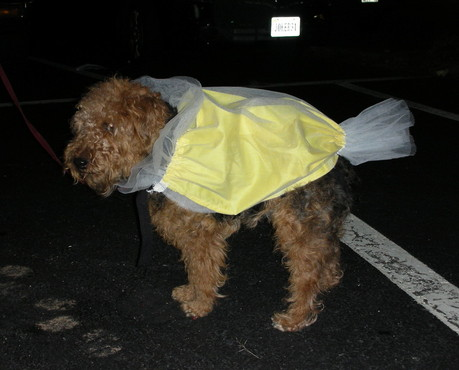 Salt-Water-Taffy-Dog-Costume