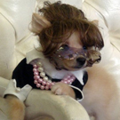 Sarah Palin Dog Costume