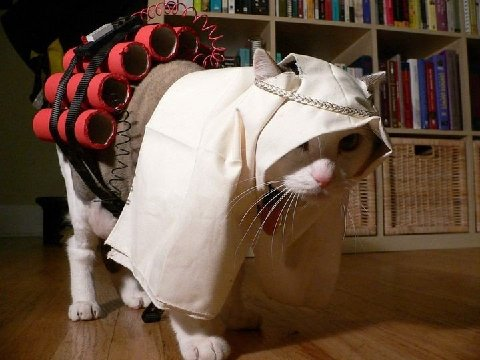 Suicide-Bomber-Cat-Costume