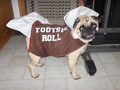 Tootsie-Roll-Dog-Costume