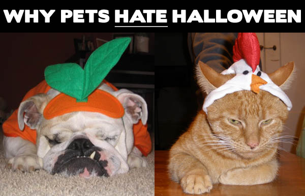 Why-Pets-Hate-Halloween
