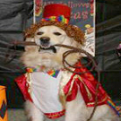 Circus Tiger Tamer Dog Costumes