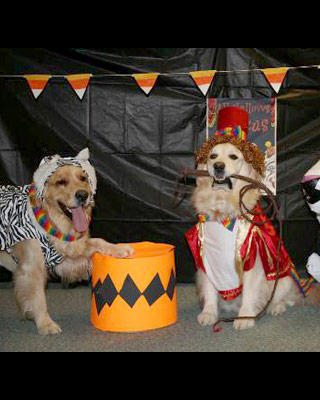 circus-tiger-tamer-dog-costumes