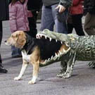 Dog Eaten by Alligator Costume
