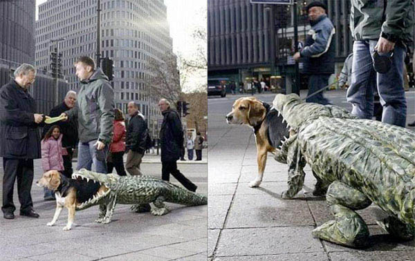 dog-costume-being-eaten-by-an-alligator