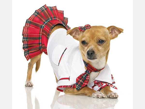 school-girl-dog-costume.jpg