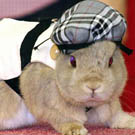 School Girl Bunny Pet Costume