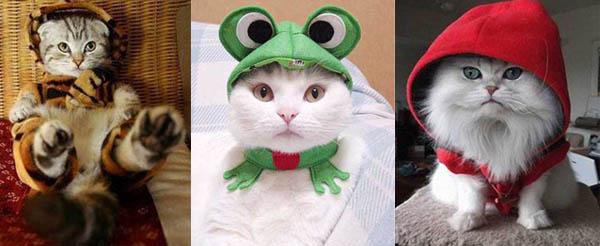Costume-Cats