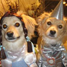 Dorothy and the Tin Man Dog Costumes