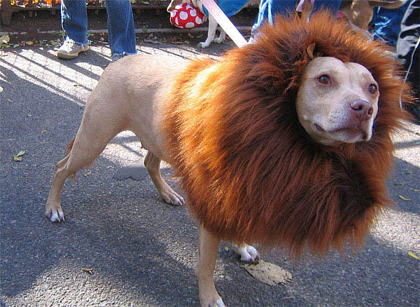 dog-lion-costume