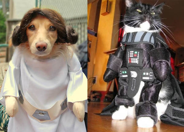pets-in-star-wars-costumes