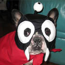Nibbler Futurama Dog Costume