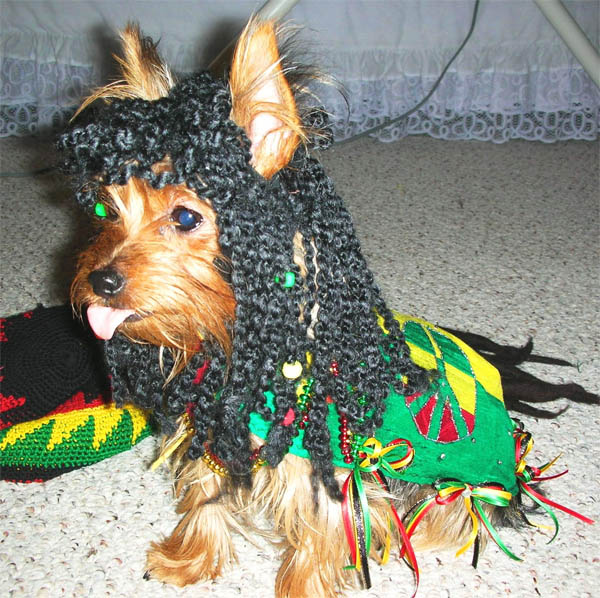 reggae-dog-costume