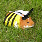 Guinea Pigs… in costume!