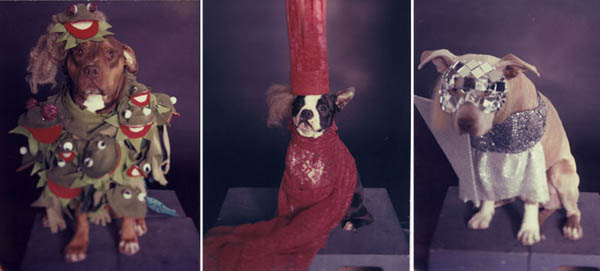 Dogs Dressed As Lady Gaga
