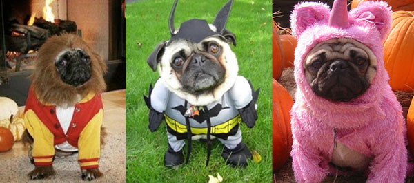 Teen Pug Batpug and the Illusive Pugicorn