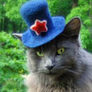 To Scarborough Fair Hats for Cats