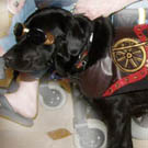 Steampunk Dog Costume